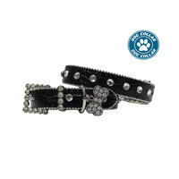 Pure Western Bailey Dog Collar (P8W1914CLR)